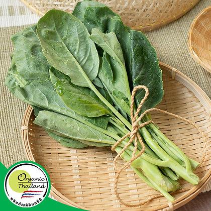 ยอดคะน้า Organic (200 กรัม/แพ็ค)