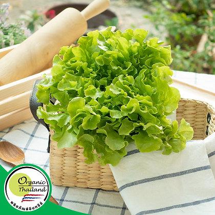 กรีนโอ๊ค Organic (150 กรัม/แพ็ค)