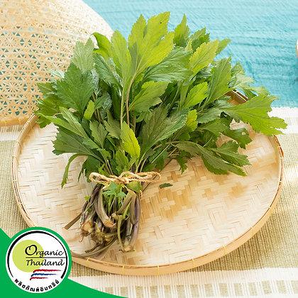 จิงจูฉ่าย Organic (150 กรัม/แพ็ค)