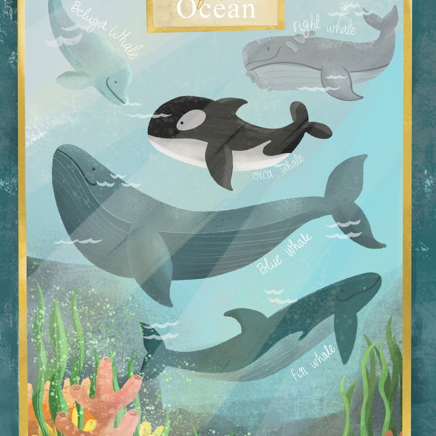 Educational_Poster_Whales_Ocean_Aquatics