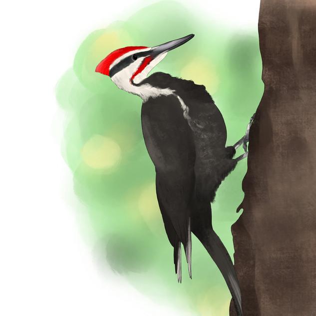 Woodpecker_.jpg
