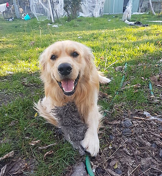 Anita's dog.jpg