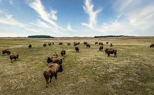 Buffalo-0030.jpg