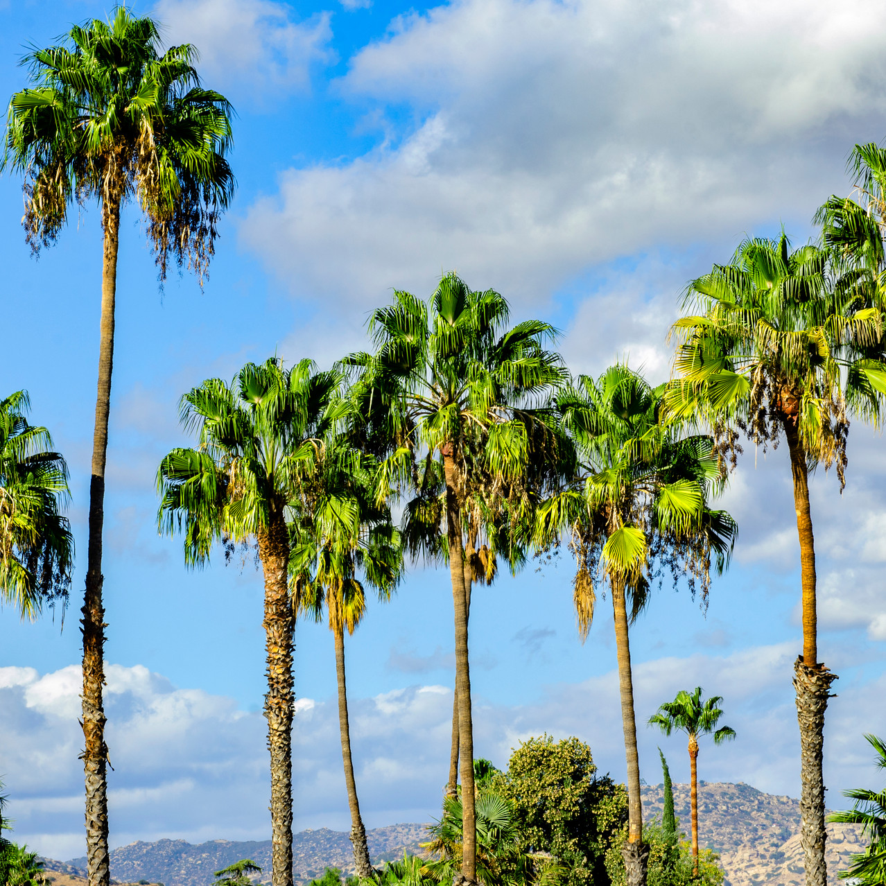 Lauren Hedges Photography Woodland Hills California Palm Tree