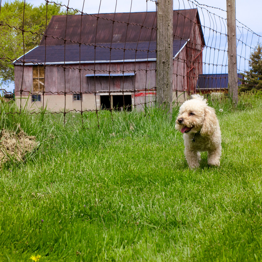Lauren Hedges Photography Essex County Dog