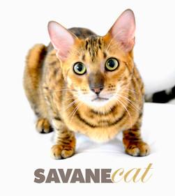Seance Photo + Savane Cat