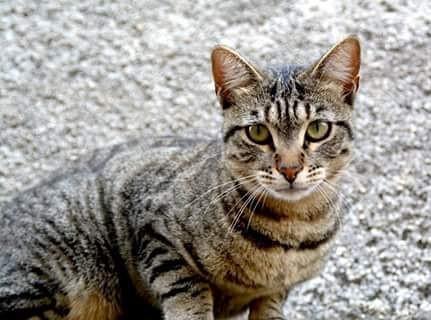 #chat #cat #gato #menton #france #mer #v