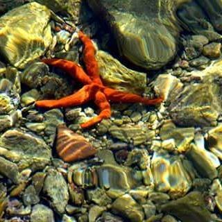 #etoile #estrella #mar #mer #ocean #océa