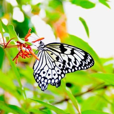 Angela Blanc Photographe #fleur #nature
