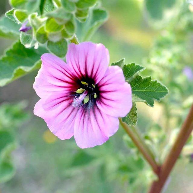 #fleurs #flora #flowers #primavera #prin