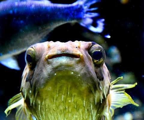 #musee #monaco  #oceanografic #pez #pesc