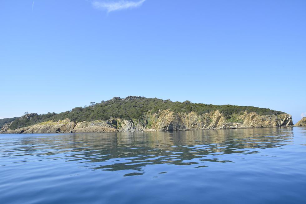 L'île De Port Cros.jpg