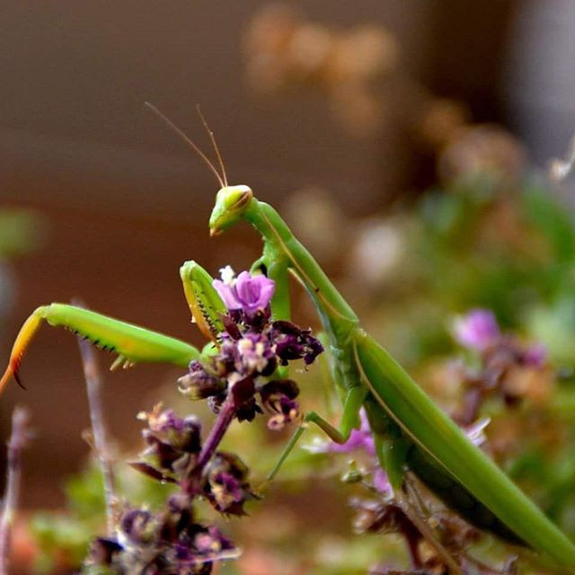 Le plus rock and roll des bêtes. #insect