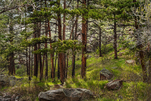 forest-twilight-10jpg