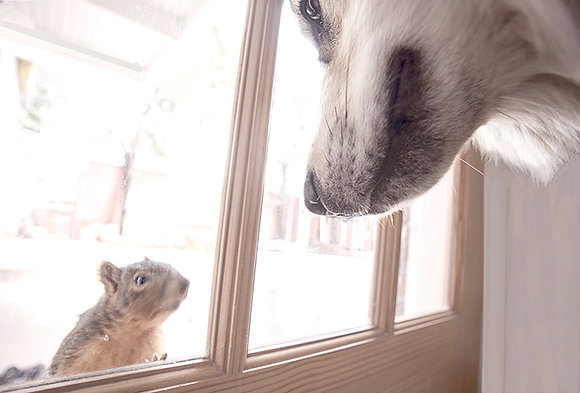 Mesmerized, Squirrel and Dog