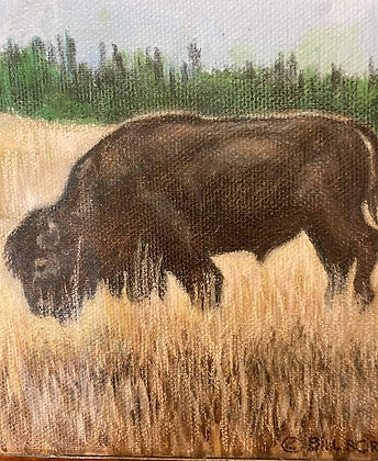 """Buffalo"" by Bill Border"