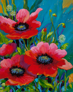 Poppies in Bloom