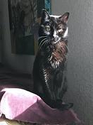 Kitty Noir.png