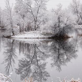 Snowy Morning at the Duck Pond *Wow Award*