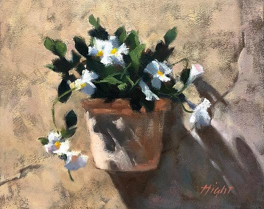 Flowers of Menerbes