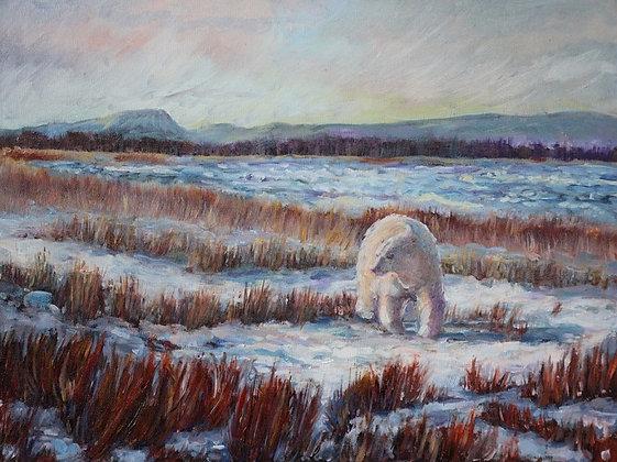 Hudson Bay Bear