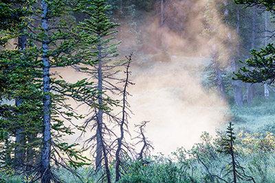 Absorbing Mist
