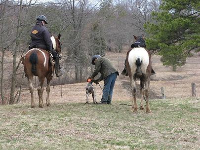 Nutmeg German Shorthaired Pointer Club, CT, Field Trial, Dog, Horse