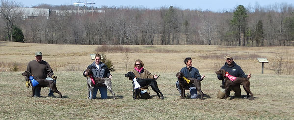 Nutmeg German Shorthaired Pointer Club, CT, Field Trial, Dog, Horse, Bird, Placements, Ribbons