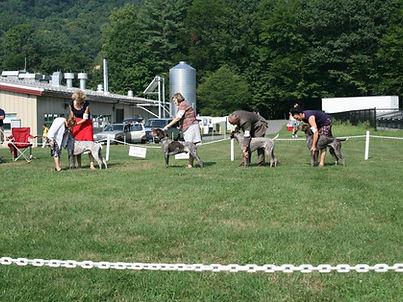 Nutmeg German Shorthaired Pointer Club, CT, Field Trial, Hunt Test, Dog Show, Dog, Horse, Bird, Puppies