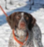 Nutmeg German Shorthaired Pointer Club, CT, GSP, Dog Trials, Dog Shows