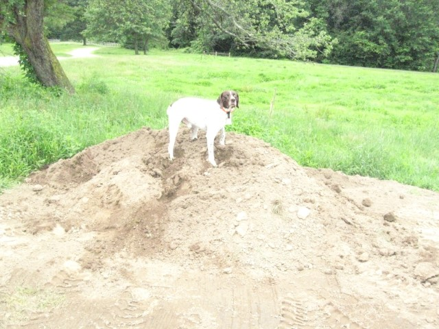 Filling Dog Holes