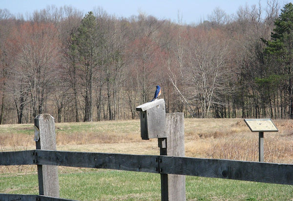 Nutmeg German Shorthaired Pointer Club, CT, Field Trial, Hunt Test, Dog Show, Dog, Horse, Bird, Puppies, Bluebird