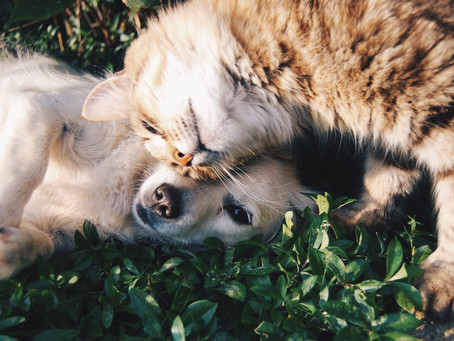 Le Magnétisme pour la santé de vos animaux de compagnie