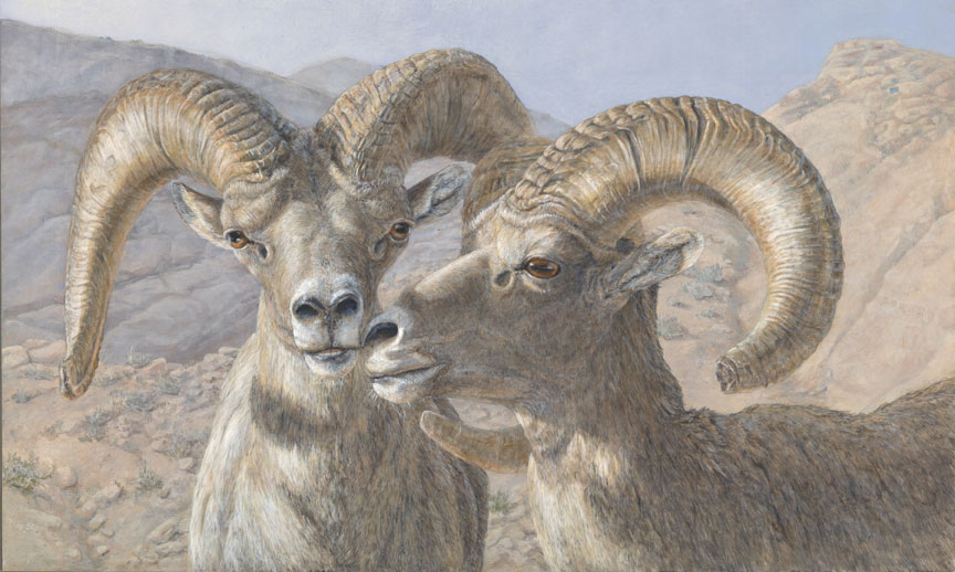 6_Bighorn.jpg