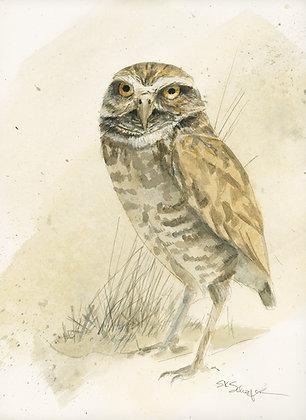 BURROWING OWL_Study#1
