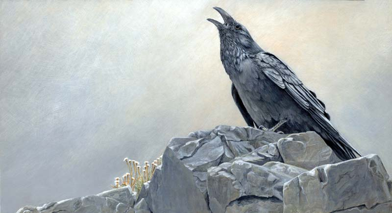 6_Raven.jpg
