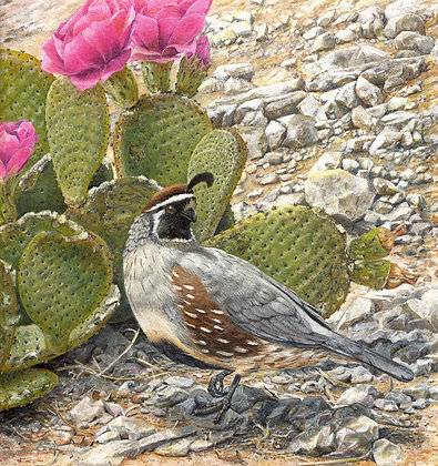SPRING PROMISE: Gambel's Quail and Prickly Pear