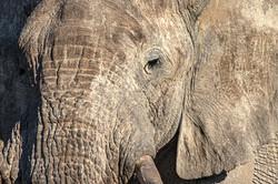 Elephant, Etosha NP, Namibia