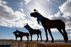 Arvaikheer Horse Memorial