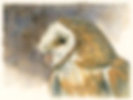 Barn Owl portrait watercolor painting by wildlife artist and photographer S.K.Schafer available at skydancestudio.com