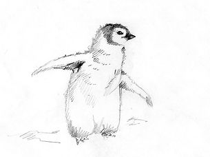 Emperor Penguin graphite on paper drawing by wilife artist and photographer S.K.Schafer available at skydancestudio.com