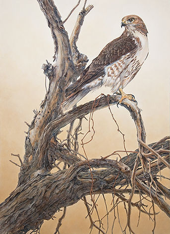 Redtail Sunrise acrylic painting by wildlife artist and photographer S.K. Schafer available at skydancestudio.com