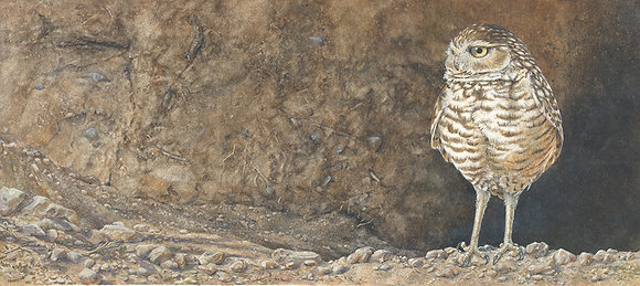 ON THE FRONT PORCH:Burrowing Owl