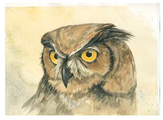 GREAT HORNRED OWL_Study#1