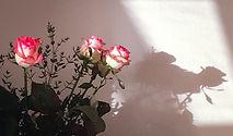 photo de fleurs roses dans le cabinet de marilyn merlo psychologue liège