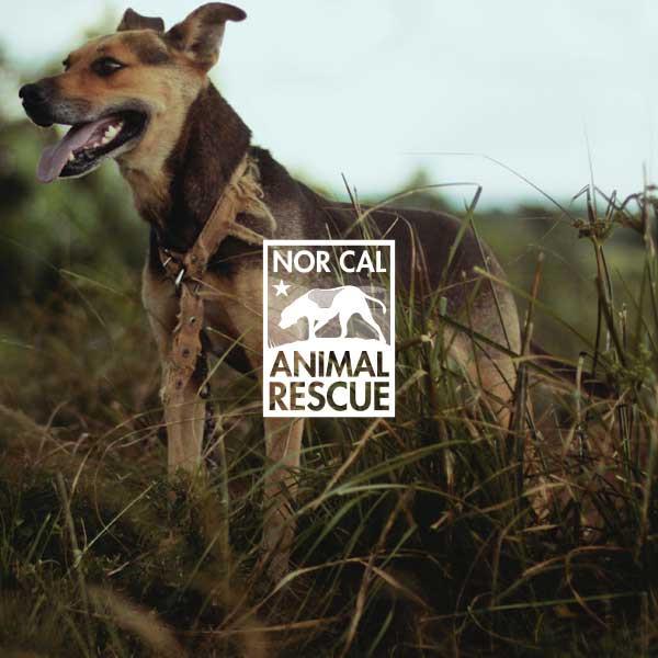 Animal Rescue Nonprofit Branding