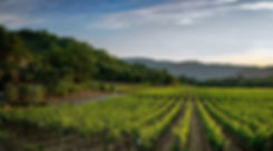 Wine Country Touring Company Website Vineyard Photograph