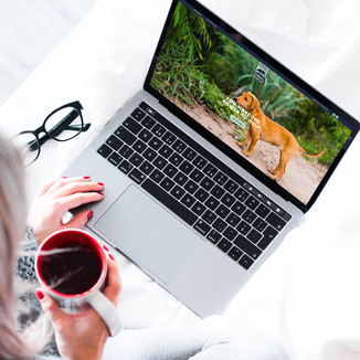 Norther Californian Animal Rescue Website Design beign viewd on a Laptop Computer