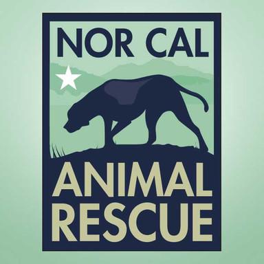 Nor Cal Animal Rescue Branding and Logo Design