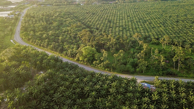 palm oil 2.png